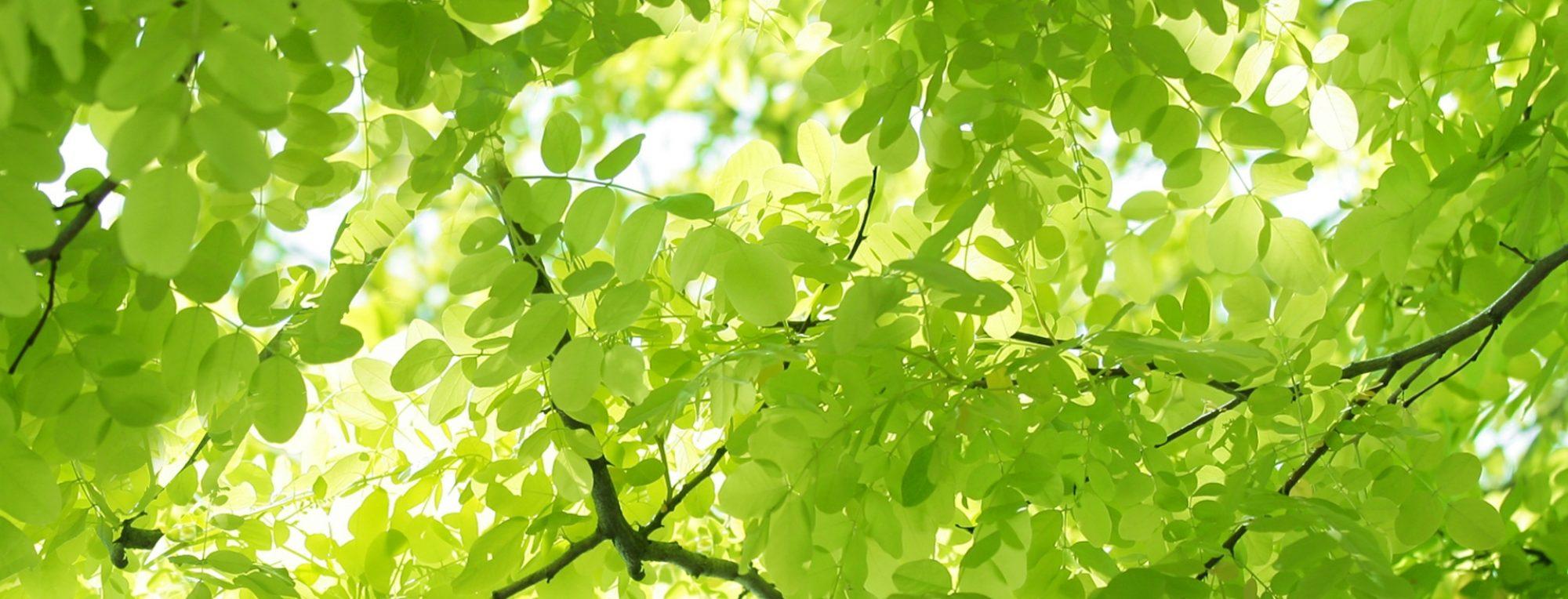 桐花園のブログ